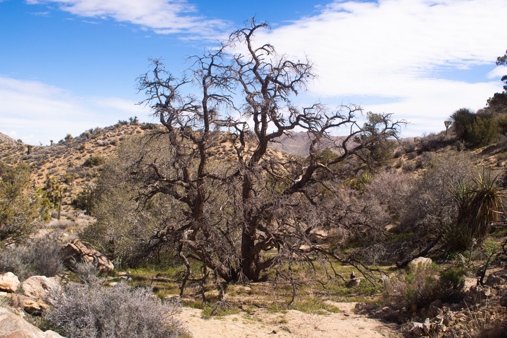 Bored Vegetarian Bethany Pickard Yucca Valley Joshua Tree Scary Tree-15